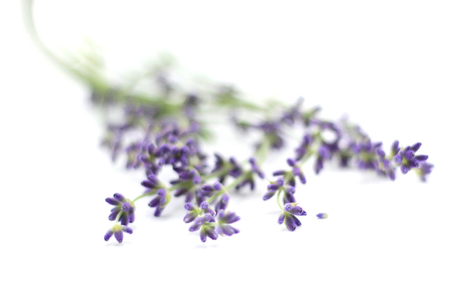 benefits of lavender water